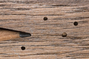 Tiny exit holes in wood paneling caused by the wood boring activity of adult powder post beetles
